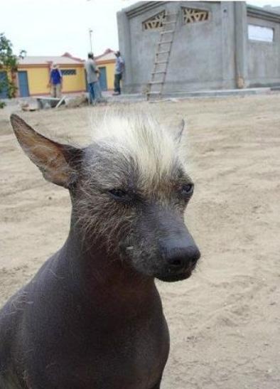 khala-greatdogsite-com