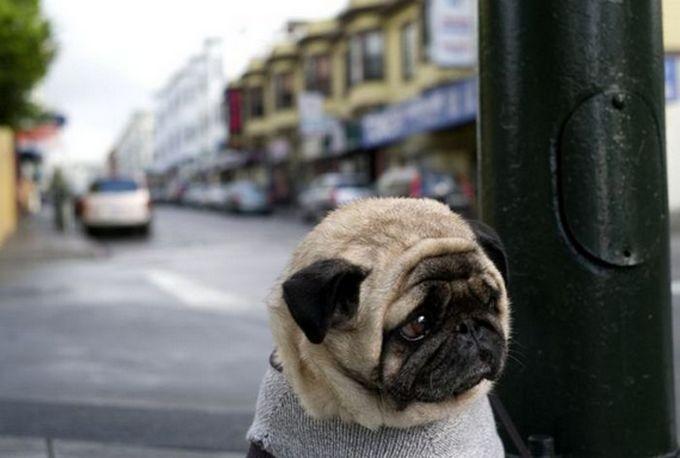 sad-dog01-