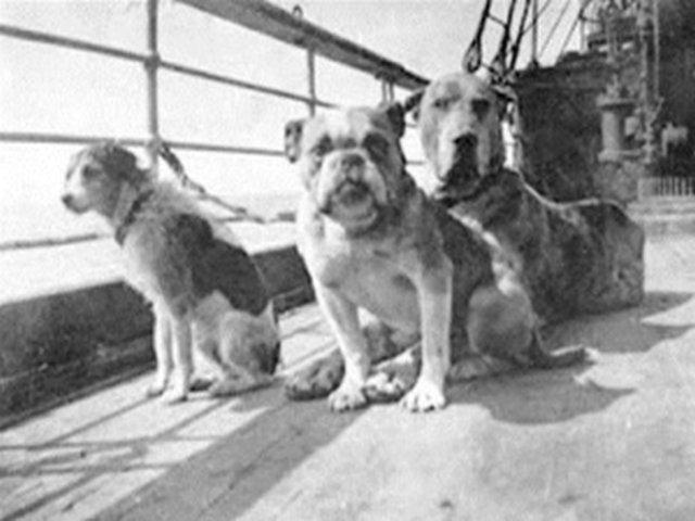 titanic-dogs-1