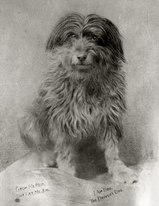 Tarihten içinizi ısıtacak 10 köpek hikâyesi - Patipedia