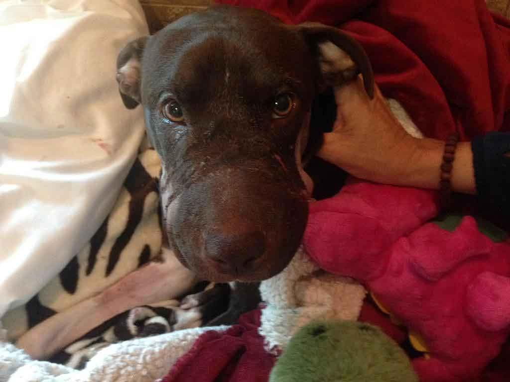 caitlyn-after-surgery-WCSC