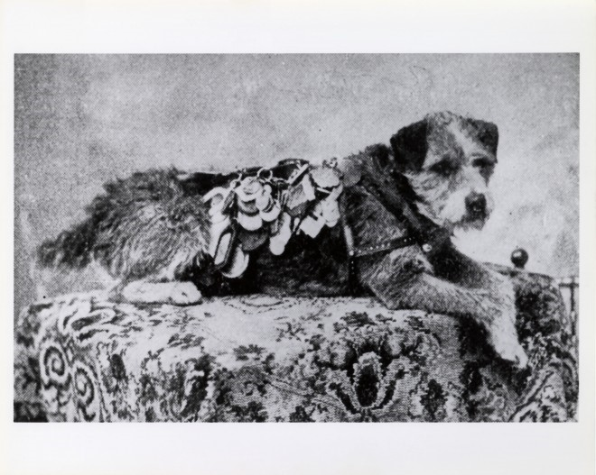 Omney The Postal Dog - wikipedia