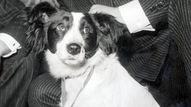 Pickles – The Dog that Saved the World Cup