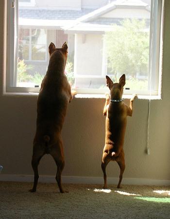 dogbehavioranswerscom