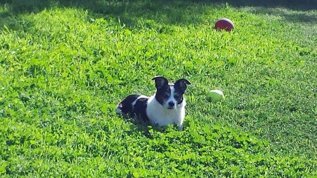Pepper'ın oynadığı ve aynı zamanda ölü bulunduğunu parkta çekilmiş bir fotoğrafı