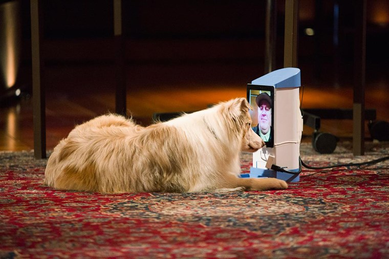 Tablette sahibini izleyen bir köpek. Washington, Spokanelili genç bir girişimcinin buluşu, hayvan sahiplerine evde olmadıkları zamanlarda hayvanlarıyla görüntülü konuşma –ve hatta ödül verme– olanağı sunuyor.