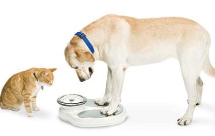 kopek-kedi-kilo